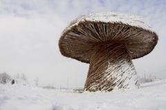 Snowy Shroom